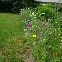 Wildblumenstreifen_Degelmann
