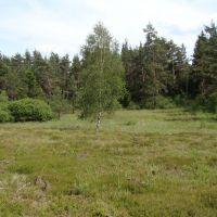 Tschechisches-Habitat2_Sichardt