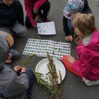 Pflanzen-suchen--bestimmen-2