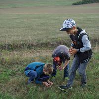 Weischlitz_Insekten_Sept19_3