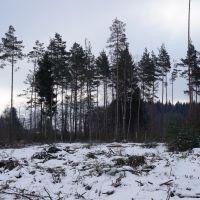 Rodung-Zinnbach_Sichardt-2