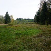 3-Zinnbach_Entbuschung2016