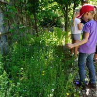 Nachkontrolle-Ansaat-Wildblumen